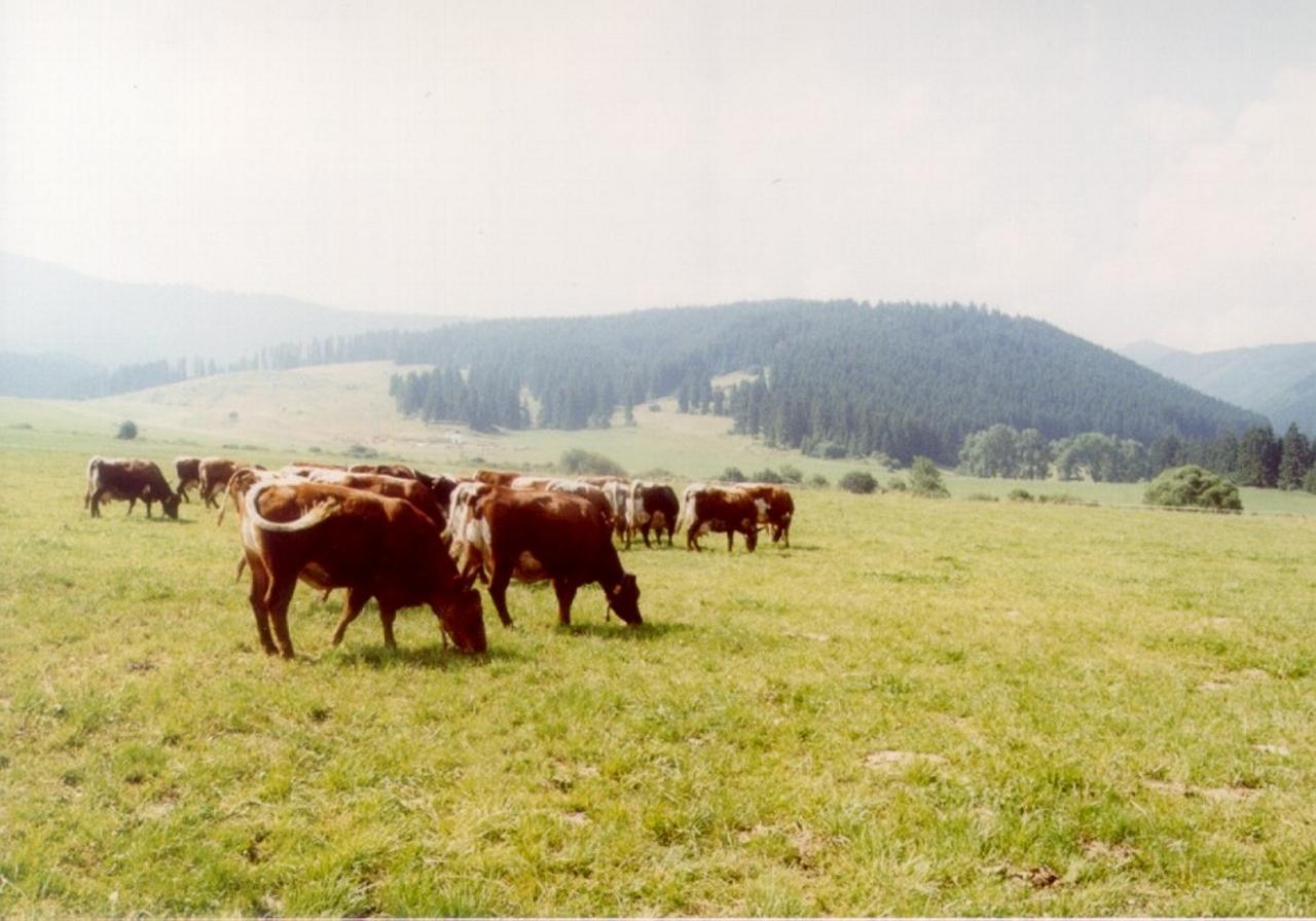 kravy